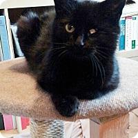 Adopt A Pet :: Annie - Barrington Hills, IL