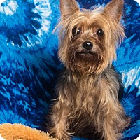 Adopt A Pet :: Scooter - Seminole, FL