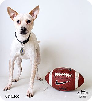 Blue Heeler/Terrier (Unknown Type, Medium) Mix Dog for adoption in Luling, Louisiana - Chance
