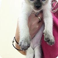 Adopt A Pet :: Skippy John Jones - Toledo, OH