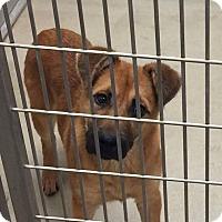 Adopt A Pet :: Clyde - Humble, TX