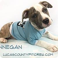Adopt A Pet :: Finnegan - Toledo, OH