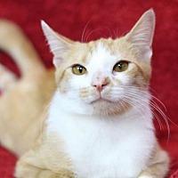 Adopt A Pet :: Marigold K - Raleigh, NC