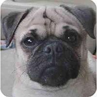 Adopt A Pet :: Georgie-VA - Suffolk, VA