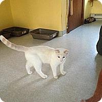 Adopt A Pet :: Stetson - Lancaster, MA