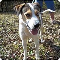 Adopt A Pet :: Lucky - Adamsville, TN