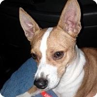 Adopt A Pet :: Chico - Justin, TX
