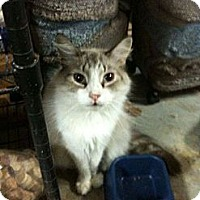 Adopt A Pet :: Dante - Pittstown, NJ