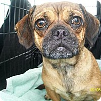 Adopt A Pet :: LaLa - Anaheim, CA