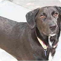 Adopt A Pet :: Zoee - Racine, WI