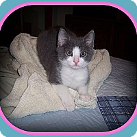 Adopt A Pet :: Porkchop - South Plainfield, NJ