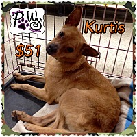 Adopt A Pet :: Kurtis - Fowler, CA