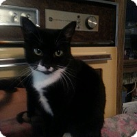 Adopt A Pet :: SuSu - Salem, OR