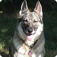 Adopt A Pet :: Maya*ADOPTION PENDING* - Mill Creek, WA