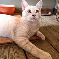 Adopt A Pet :: ATLAS - Burlington, NC