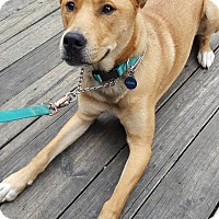 Adopt A Pet :: Riley Roo - Nashville, TN