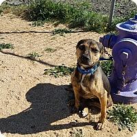 Adopt A Pet :: Kisha - California City, CA