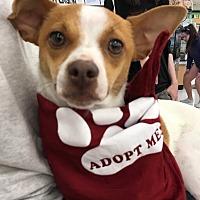 Adopt A Pet :: Kendra - Studio City, CA