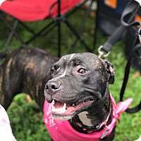 Adopt A Pet :: Mistletoe - Dayton, OH