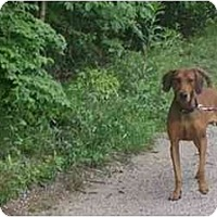 Adopt A Pet :: Red - Albany, NY