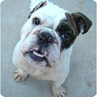 Adopt A Pet :: Mikey**adoption pending** - Gilbert, AZ