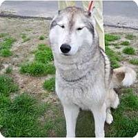 Adopt A Pet :: Casey - Huntington Station, NY