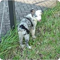 Adopt A Pet :: Trevor - Orlando, FL