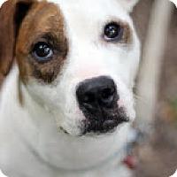 Adopt A Pet :: Celia - Tinton Falls, NJ