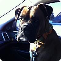 Adopt A Pet :: Bella - Tillsonburg, ON