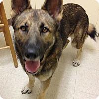 Adopt A Pet :: Shepp - Pike Road, AL
