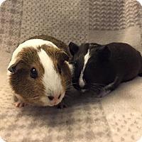 Adopt A Pet :: Daphne & Mame - Fullerton, CA
