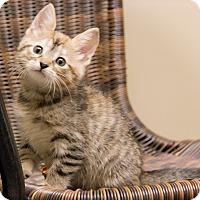 Adopt A Pet :: Lorelei - Chicago, IL