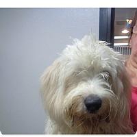 Adopt A Pet :: Farmer - baltimore, MD