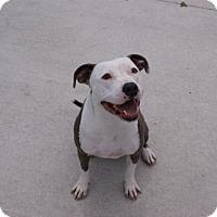 Adopt A Pet :: Timbles - Manteo, NC