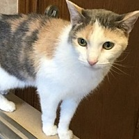 Adopt A Pet :: Audrey - Yukon, OK