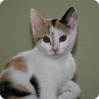 Adopt A Pet :: Sara *Adoption Pending* - Philadelphia, PA