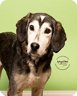 Husky/Hound (Unknown Type) Mix Dog for adoption in Cincinnati, Ohio - Sketch
