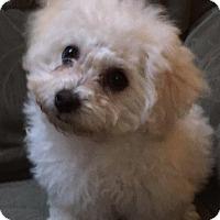 Adopt A Pet :: Pebbles - Battle Ground, WA