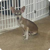 Adopt A Pet :: Natoma - Sacramento, CA