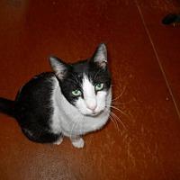Adopt A Pet :: Jefferson - San Antonio, TX