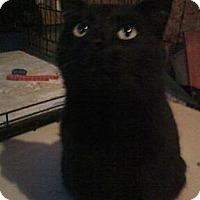 Adopt A Pet :: Darlin' - Warren, OH