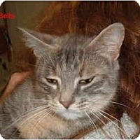 Adopt A Pet :: Bella - Albany, NY