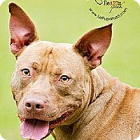 Adopt A Pet :: Gunner - Orlando, FL