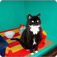 Adopt A Pet :: Bootsie - Secaucus, NJ