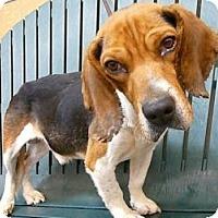 Adopt A Pet :: Berkley - Indianapolis, IN