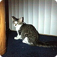 Adopt A Pet :: Lexie (big fluffy tail) - Sterling Hgts, MI