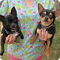 Adopt A Pet :: Cyclops and Alexis - Kingwood, TX