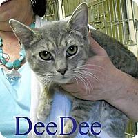 Adopt A Pet :: Dee Dee - Chesapeake, VA