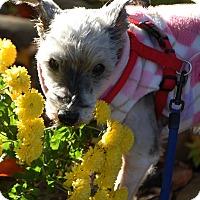 Adopt A Pet :: Nadja - Beachwood, OH