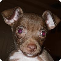 Adopt A Pet :: JoJo - dewey, AZ